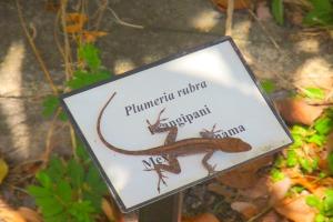 hiking lizard